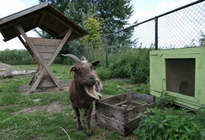 Dieren-wei bij Zorgboerderij de Kruidenhoeve in Milheeze